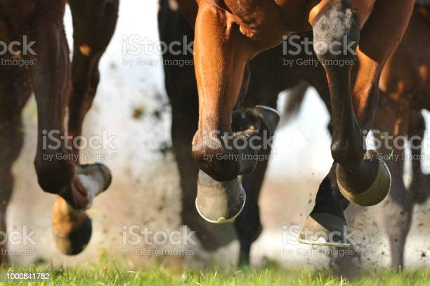 Horse racing action picture id1000841782?b=1&k=6&m=1000841782&s=612x612&h=7kbj4r9647agbxuat 03ztqut1mkso3r 6pim3 36zq=