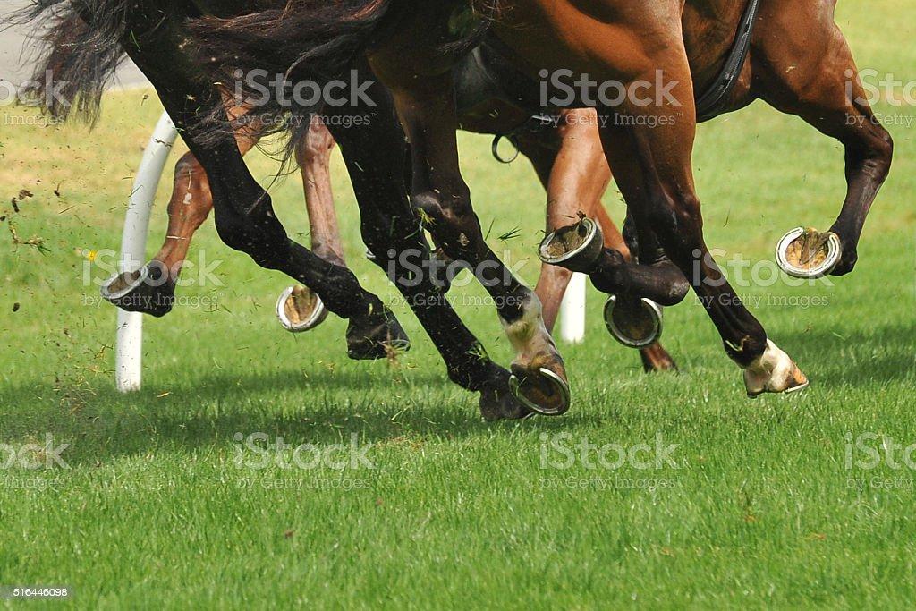Pferderennen Aktion – Foto