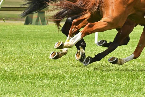 horse racing action - cavallo equino foto e immagini stock