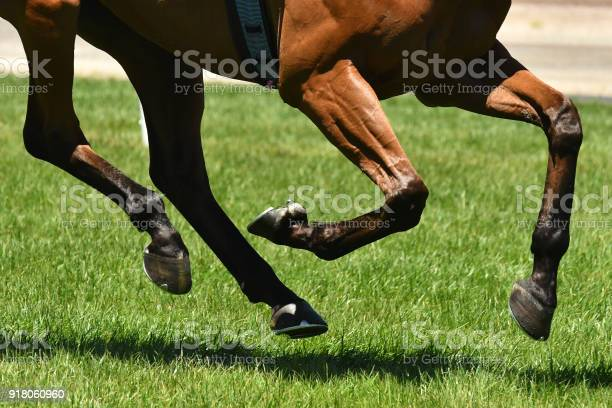 Horse racing action picture id918060960?b=1&k=6&m=918060960&s=612x612&h=r40ovle7fsobe3lgyuecaoo16qjajwrnlod n9cfyai=