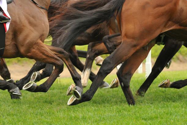 Horse racing action picture id918935484?b=1&k=6&m=918935484&s=612x612&w=0&h=h5in6mgmruds0nx76zv537r6petlcfrxfe phbmoueq=