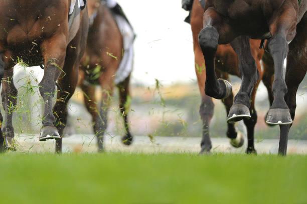 경마 조치  - horse racing 뉴스 사진 이미지