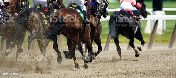 Horse racing down the stretch they come picture id182179681?b=1&k=6&m=182179681&s=612x612&h=unruvw cnwjddlubyqqk2i3oqobjz7id4uv0n7x0bi4=