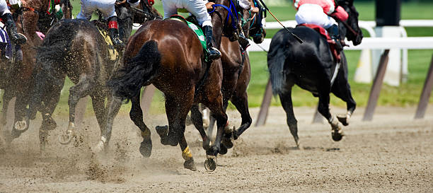Horse racing down the stretch they come picture id182179681?b=1&k=6&m=182179681&s=612x612&w=0&h=pcxo9bx8ixoqbfpy1pqosvvjsc54lhjg2hojiktjg8u=