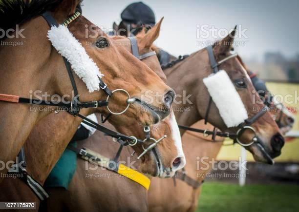 Horse racing picture id1077175970?b=1&k=6&m=1077175970&s=612x612&h=lo e37n2gcavdalg93yqdfecge02cluedt1aawrtwq4=