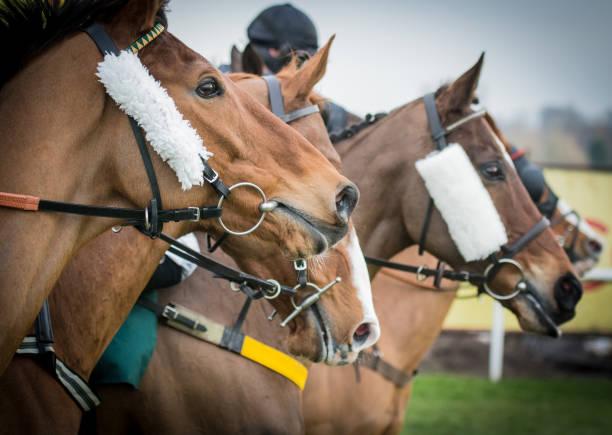 말 레이싱 - horse racing 뉴스 사진 이미지