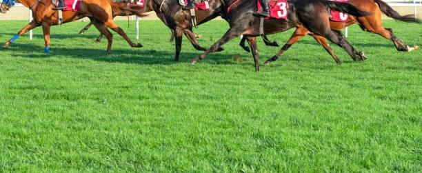 경마 - horse racing 뉴스 사진 이미지