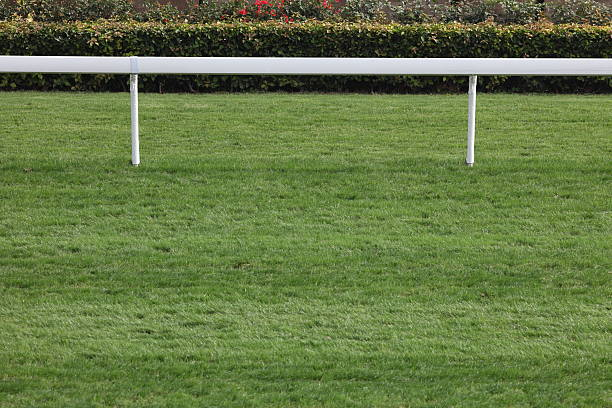 Horse Racing Track  sha tin stock pictures, royalty-free photos & images