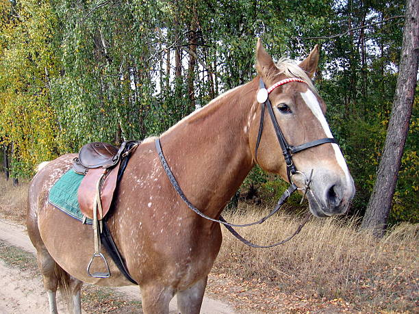 horse ready to go