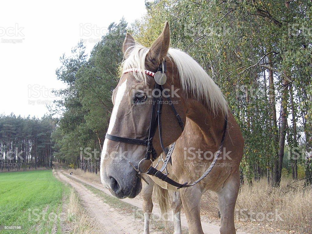 horse ready to go royalty-free stock photo