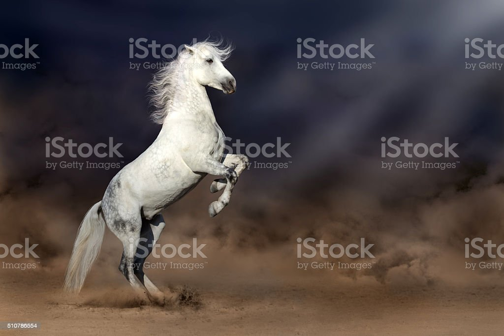 Horse rearing up stock photo