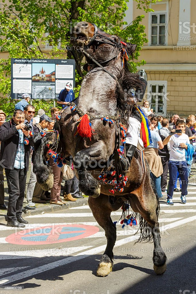 Horse rearing with rider in Brasov, Romania stock photo