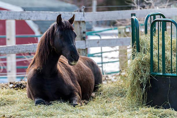 pferd sich in einigen hay - traumscheune stock-fotos und bilder