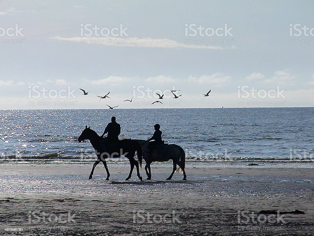 Horse ride on the beach of Deauville Horse ride on the beach of Deauville in Normandy in France, at the end of the day. The riders are in column and move forward quietly. Animal Stock Photo