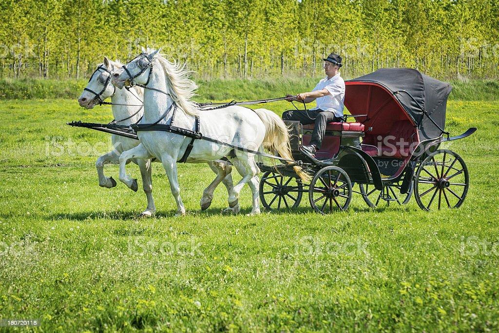 Horse ride royalty-free stock photo