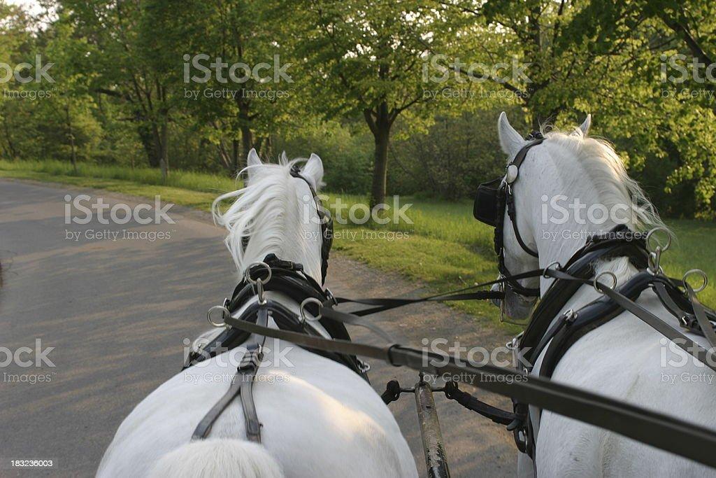 Horse ride stock photo