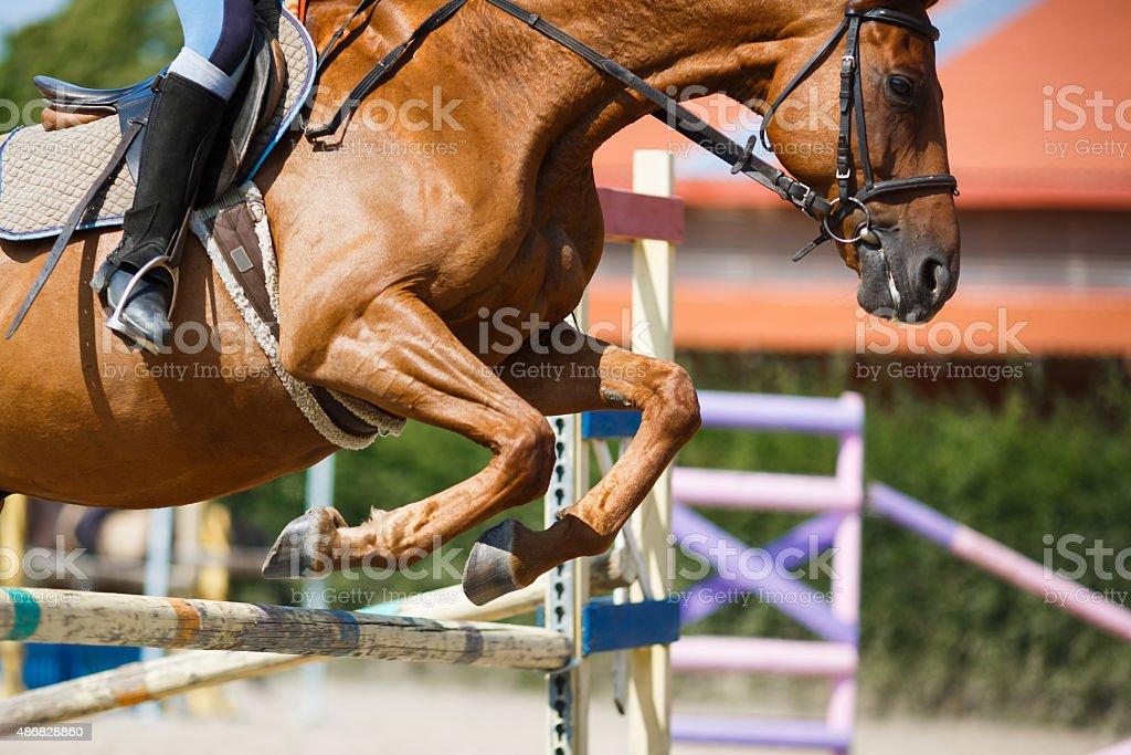 Horse rider jumping stock photo