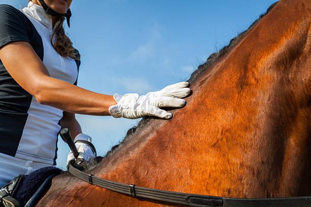 Horse rider picture id485504400?b=1&k=6&m=485504400&s=612x612&w=0&h=pdge67p8w2ih2i1zjetmv31byb8aagcg912mhoyqnge=