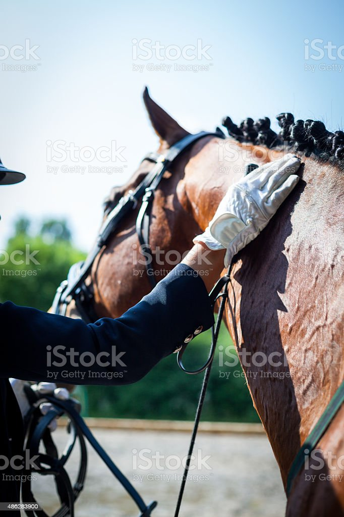 Horse rider taking care of her best friend stock photo