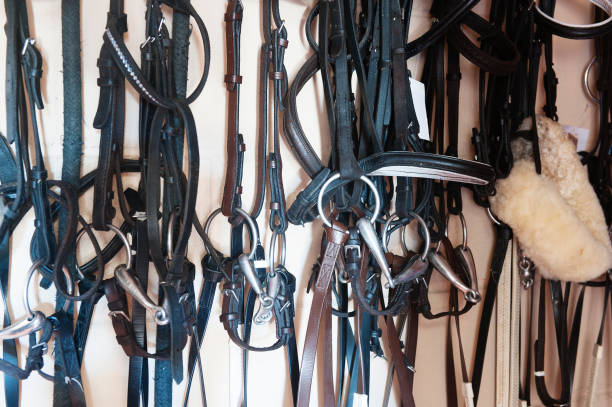 horse riding bridals haning in a tack room - horse bit stock photos and pictures