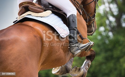 istock Horse riding dressage 541598562