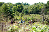 istock Horse riding friends in English woodland, Wareham Forest, Dorset, England 1277596129