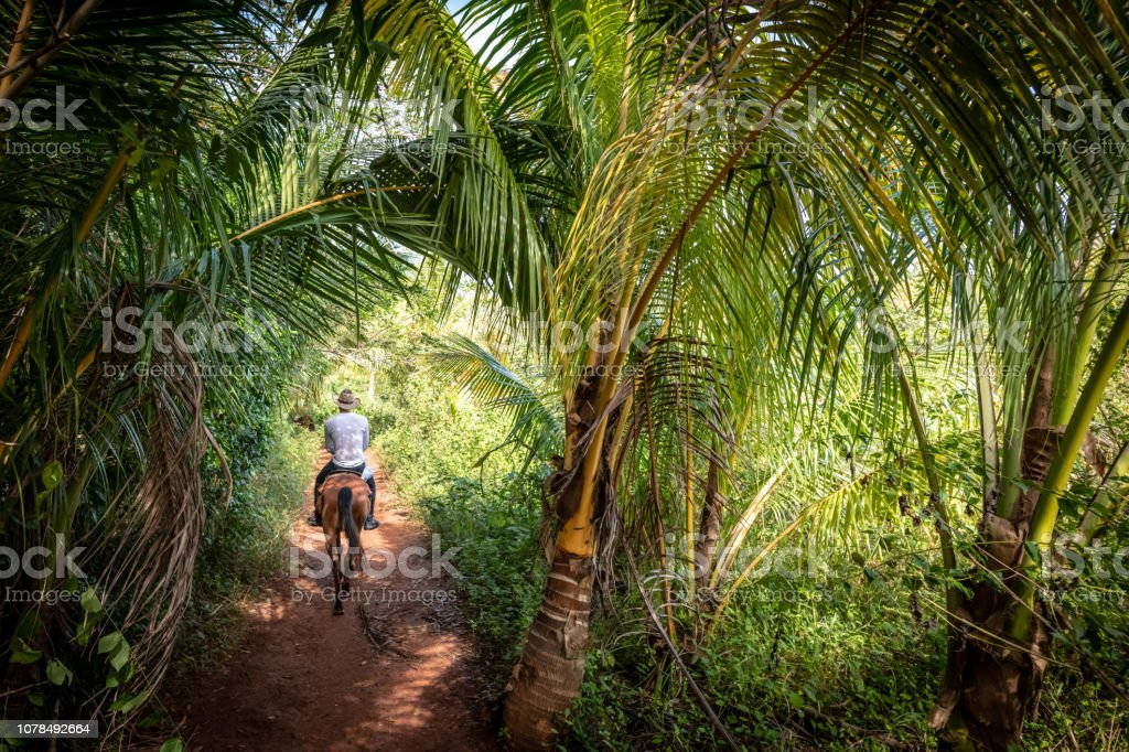 Horse riding in the lush forests of Vinales in Cuba stock photo
