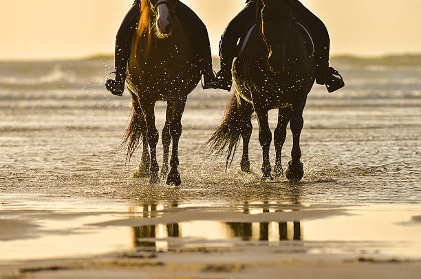 Horse riding on the beach at sunset picture id615903022?b=1&k=6&m=615903022&s=612x612&w=0&h=tlh61kp8t ehsmnc fjq7k7toloz3yxjrkubf6dcgmy=