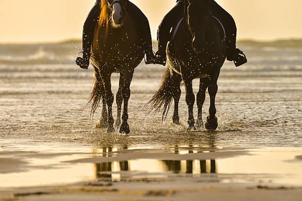 乗馬、ビーチの夕暮れ - 乗馬 ストックフォトと画像