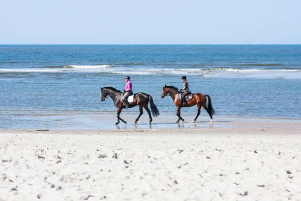 horse riding on the beach, redaktionelle - urlaub norderney stock-fotos und bilder