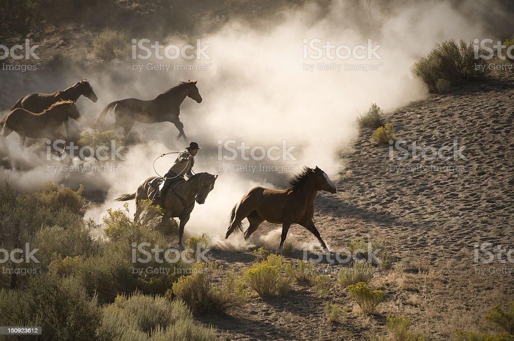 Horse roping stock photo