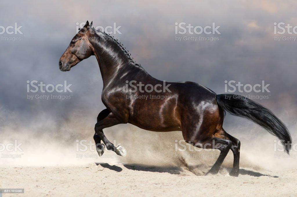 Horse run in deset stock photo