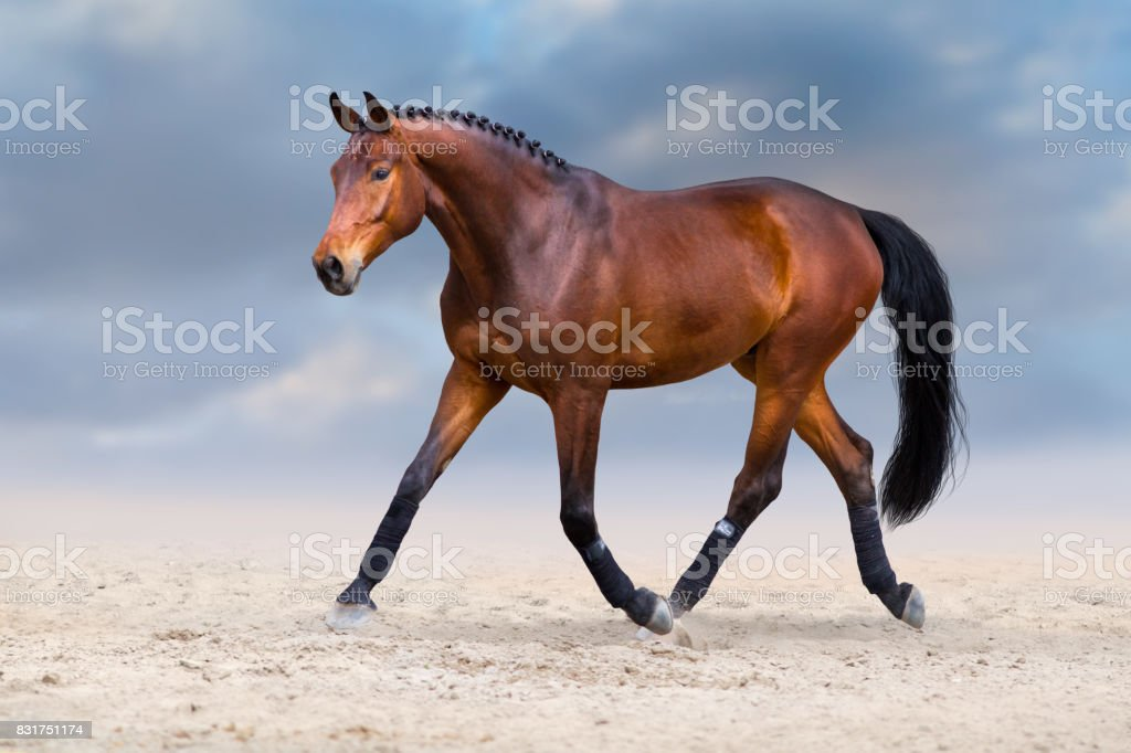 Horse run in deset stock photo