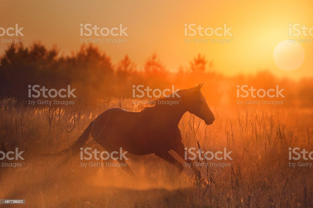 horse run on sunset background stock photo