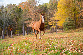 istock Horse running in a pasture 1222070844