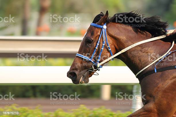 Horse running on a track in motion picture id157676210?b=1&k=6&m=157676210&s=612x612&h=lhwdpuk37arduggplygdaee6k0y93rgmxtqm1hfgwjg=