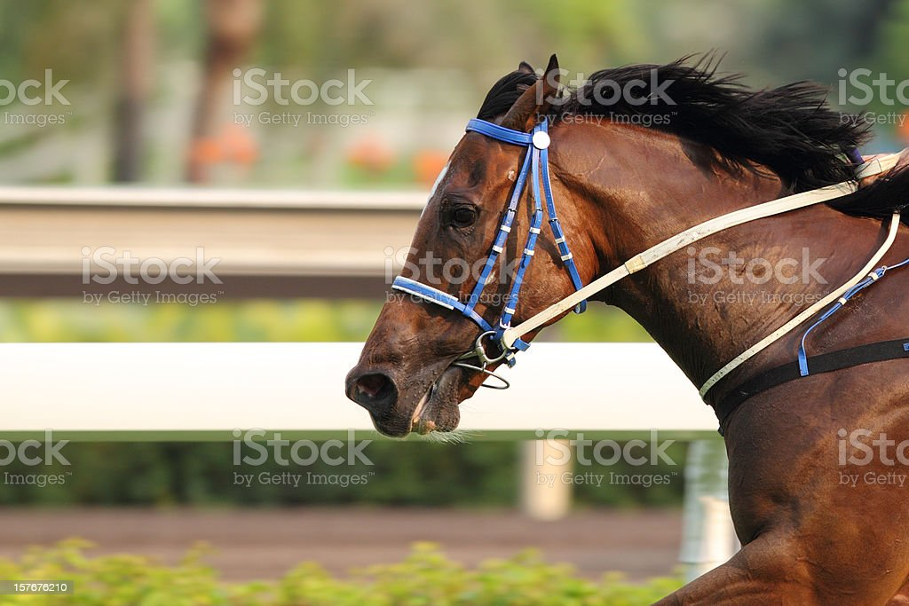 Horse running on a track in motion stock photo