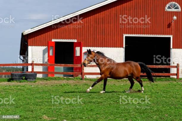 Horse running outside farm building picture id643552482?b=1&k=6&m=643552482&s=612x612&h=y8aa03ehcq7xxc  ro5fyz2saykoozocjdpum87isxk=