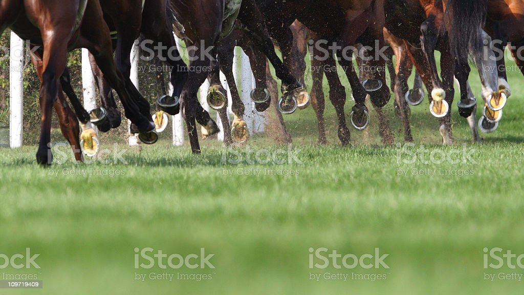 Horse Running stock photo