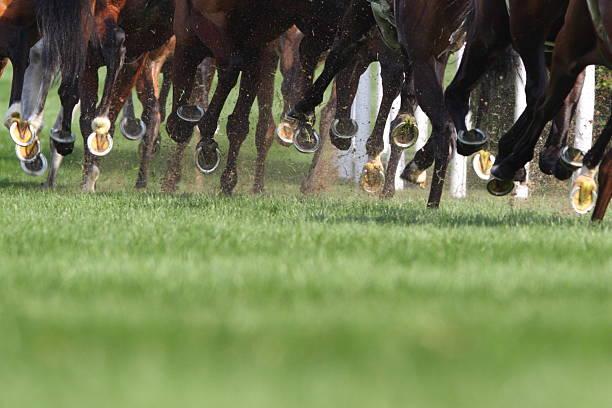 말 실행 - horse racing 뉴스 사진 이미지