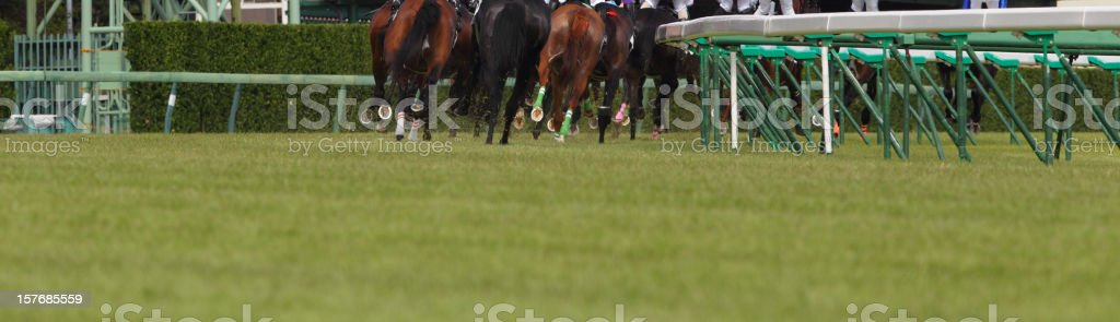 Horse Running royalty-free stock photo