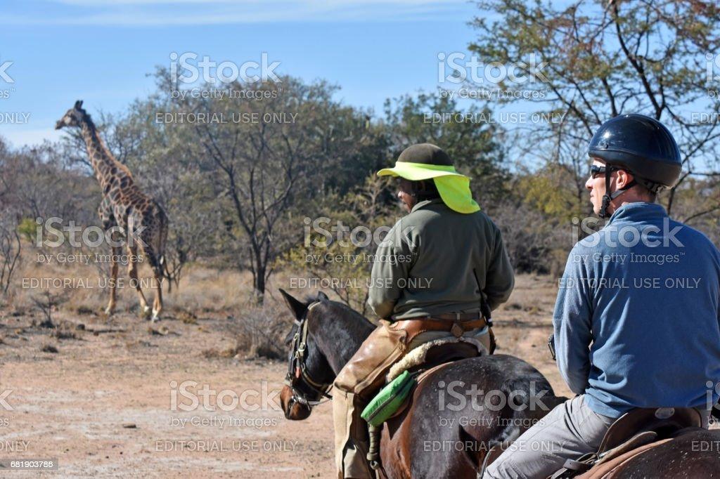 horse safari – Foto