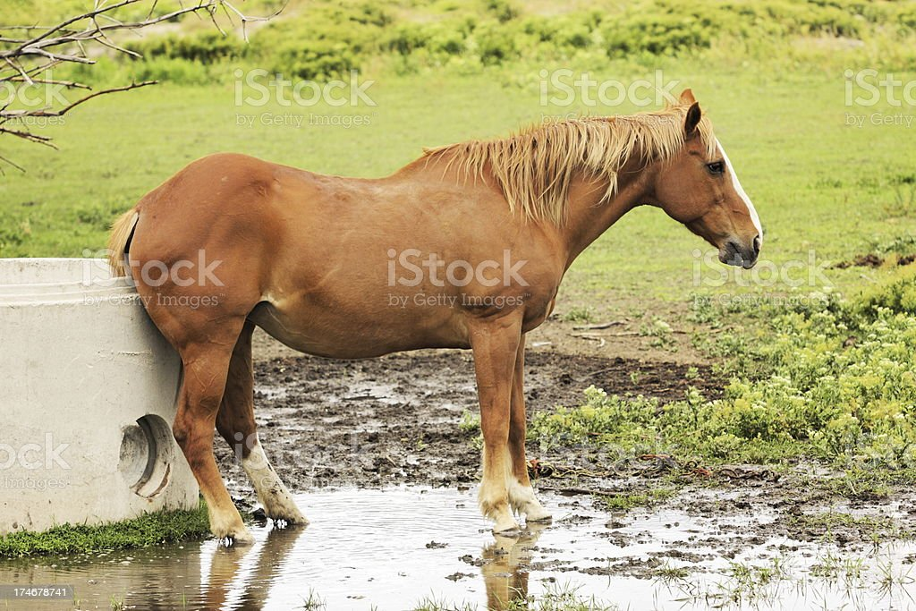 \'Horse scratching an itch on its rump using the edge of a concrete...