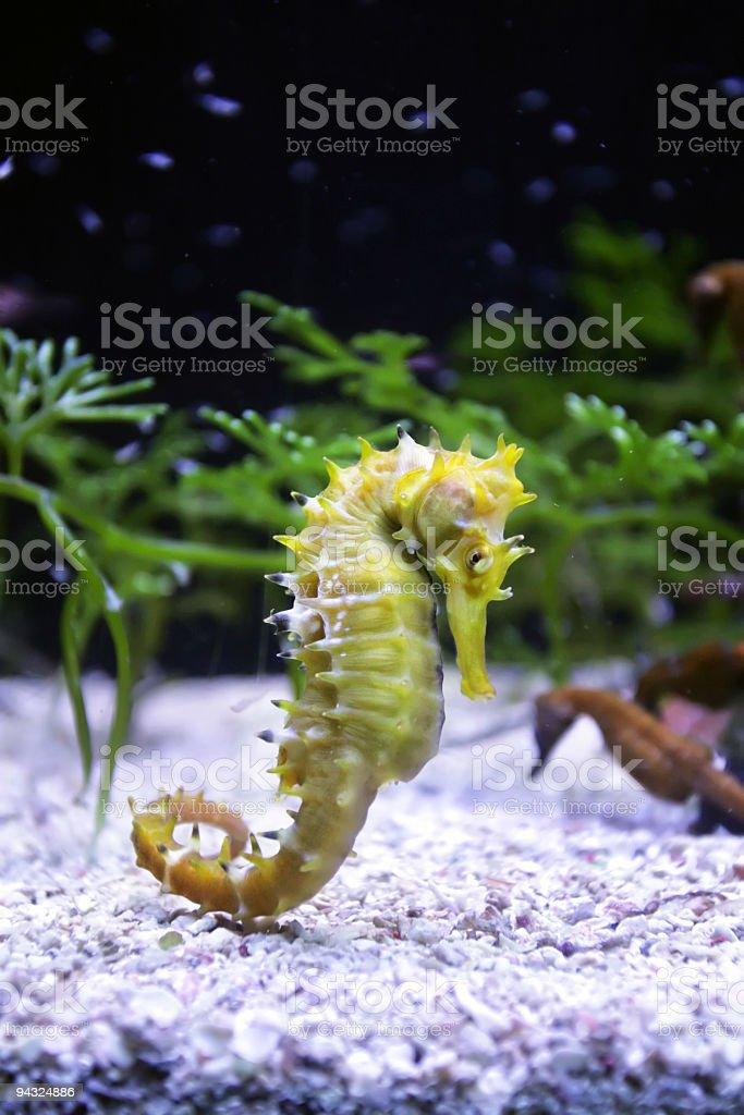 horse sea royalty-free stock photo