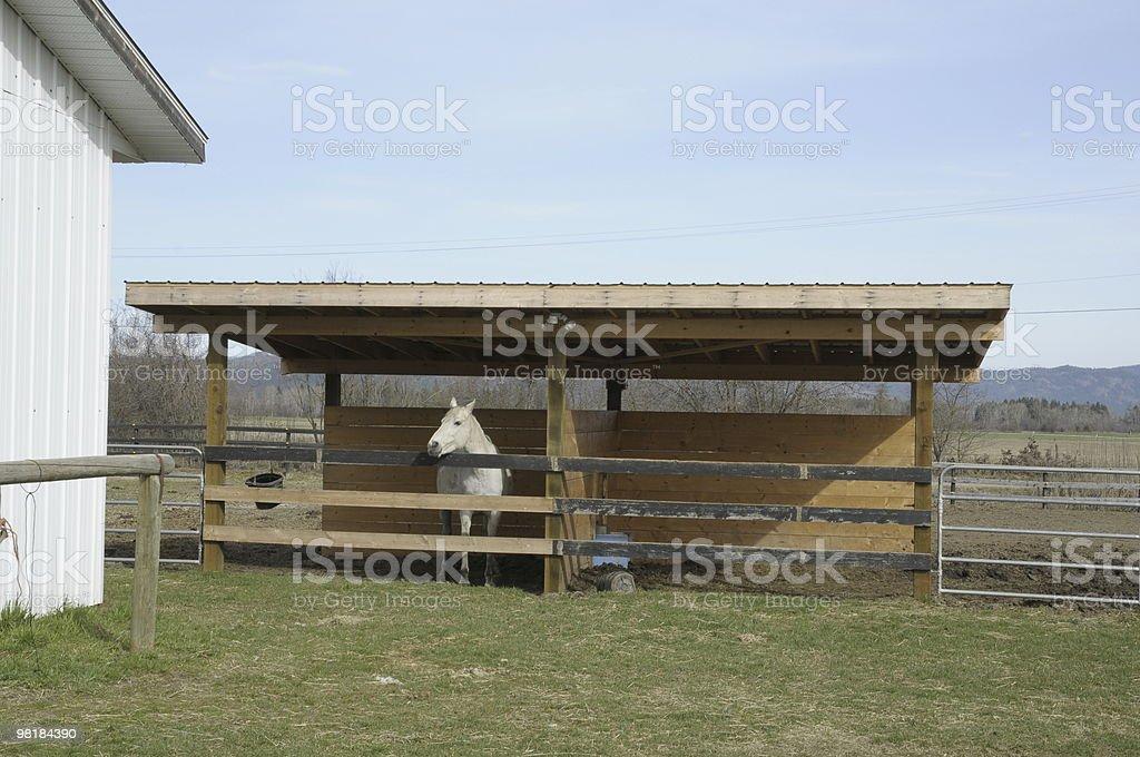 Horse Shelter royalty-free stock photo