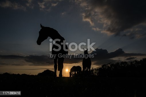 Horses in silhouette at sunset on a summer evening