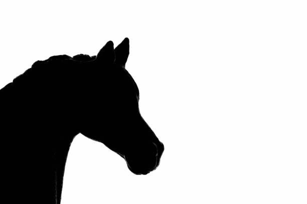 Horse silhouette picture id1194671119?b=1&k=6&m=1194671119&s=612x612&w=0&h=eftyh tmzn 8ihjmszsfsuowxvm80f4gzv9ujchgh q=