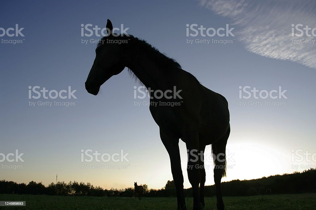 Horse silhouette royalty-free stock photo