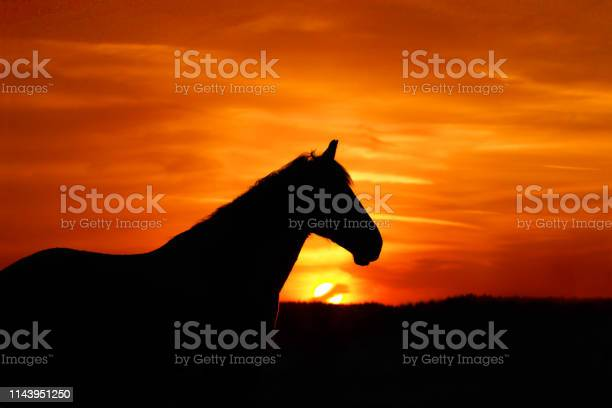 Photo of Horse silhouette, sun, red and orange sunset. Portrait of a horse