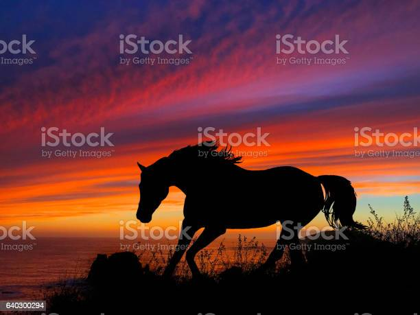 Horse silhouette sunset picture id640300294?b=1&k=6&m=640300294&s=612x612&h=16hafk3qszc4qf0 0ftfvkaqmbuslhgwxsl7wg3ouqs=